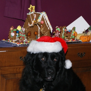 Baloo can has ginger bread house.